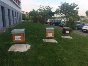 ruches chez Dodin