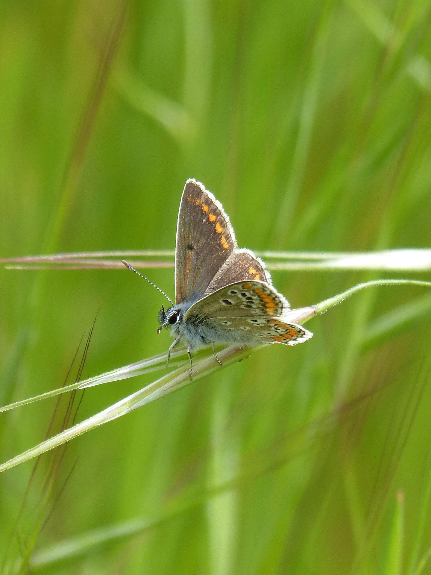 audit biodiversite
