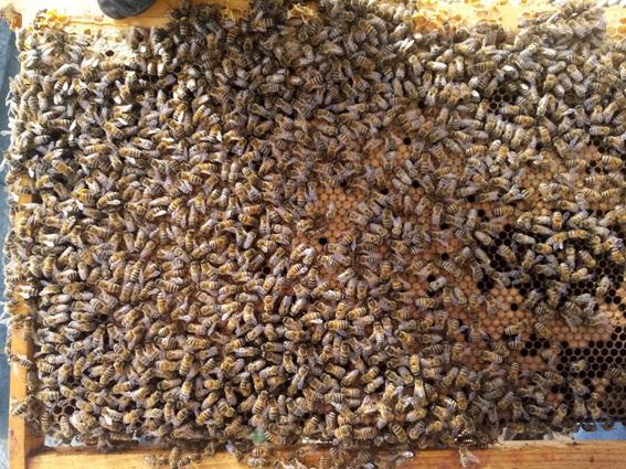 Visite ruche printemps